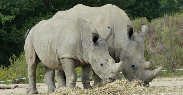 Séjour familial au Safari de Peaugres