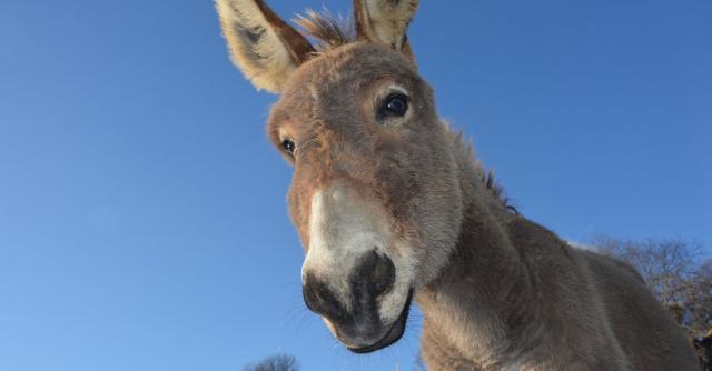 Bivouac : En pleine nature avec les ânes