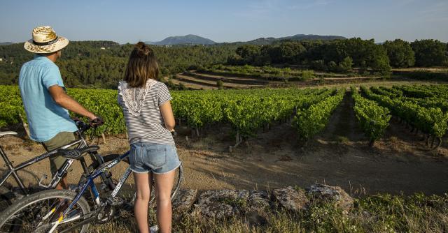 A vélo- Vignobles Sud Ardèche