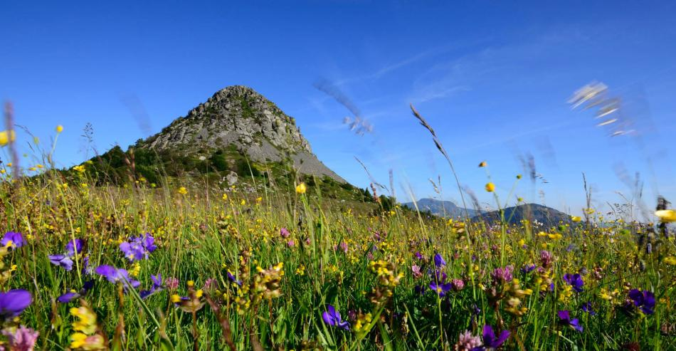 Tourisme en Ardèche : Le Mont Gerbier de Jonc