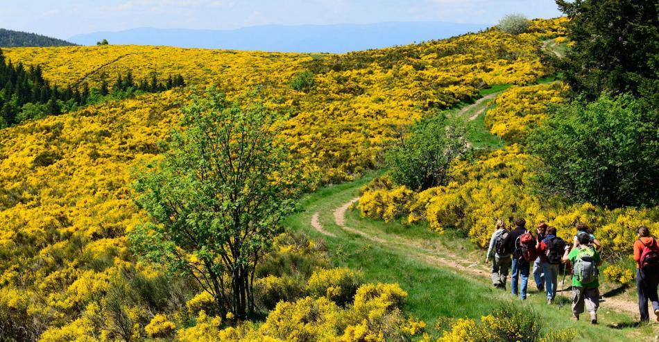 Tourisme en Ardèche :  La Randonnée en Ardèche - Borne