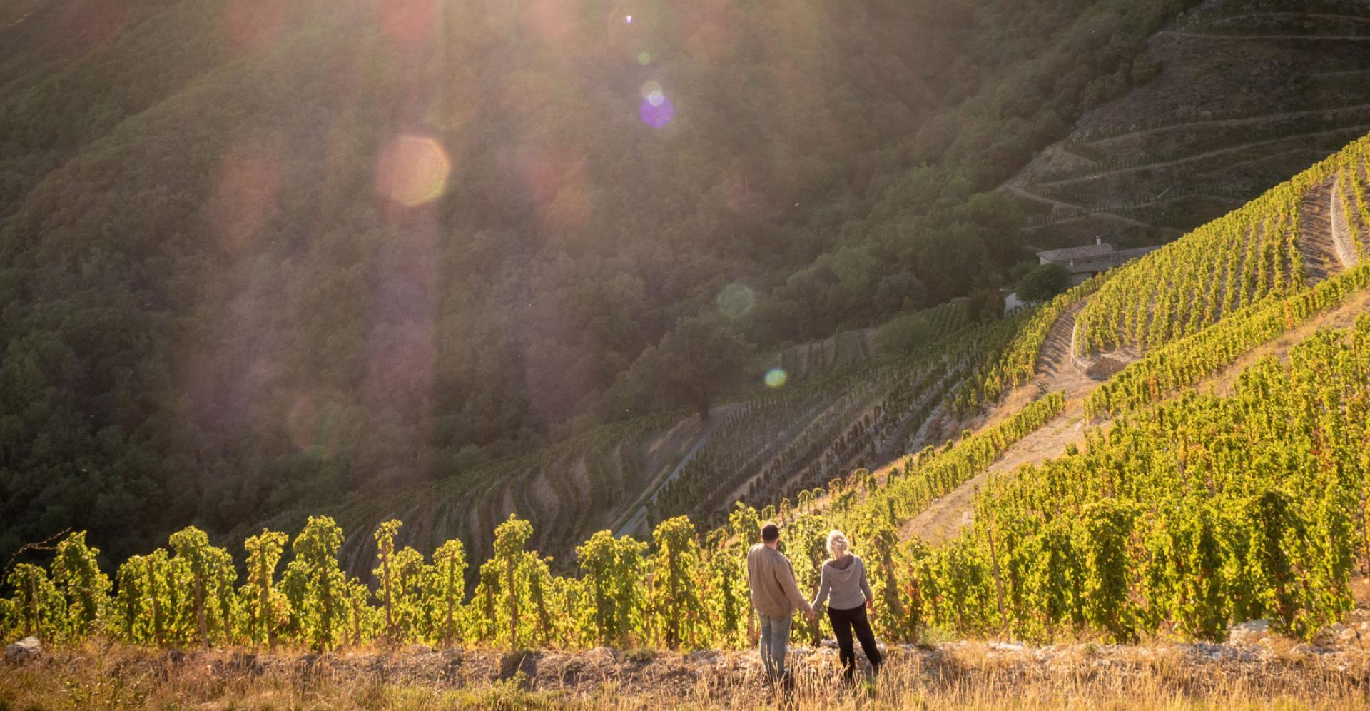 Tourisme en Ardèche : Le vin et la châtaigne