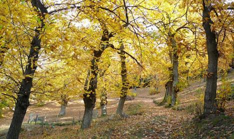 Bogues d'automne