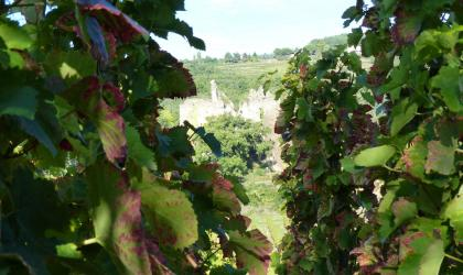 Hermitage Tournonais Tourisme - vigne