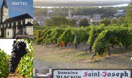 Domaine Blachon - Vigne