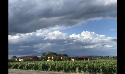 Domaine de Chasselvin - les vignes