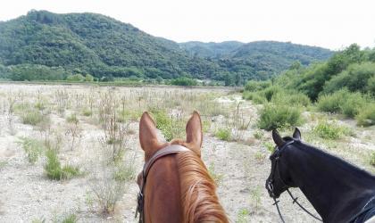 Soi'Equestre