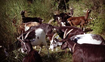 Chèvrerie des Montfleury à Mirabel - Chèvrerie des Montfleury à Mirabel