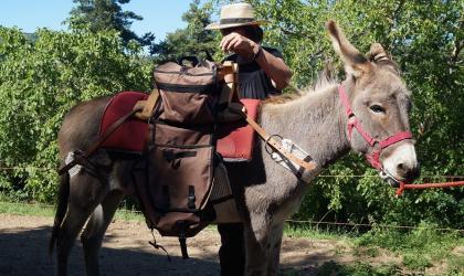 Les Marraignes - Balade avec ânes bâtés