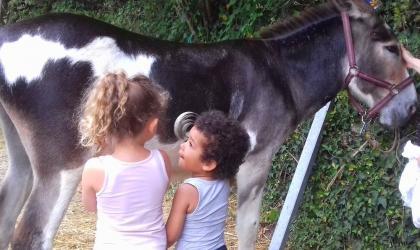 ©Comédi'ânes - Enfants avec âne