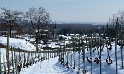 - Mauves sous la neige - Domaine Coursodon