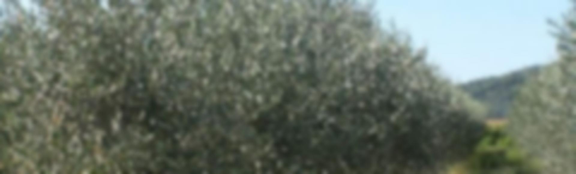 Lou mouli d 39 ol les tapes savoureuses ard che bourg - Office de tourisme bourg saint andeol ...