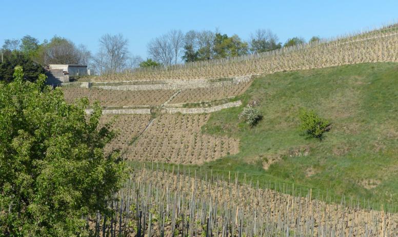 Hermitage Tournonais Tourisme - Vignes