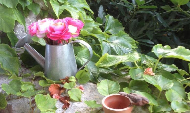 Fleurs - Domaine de la Manse