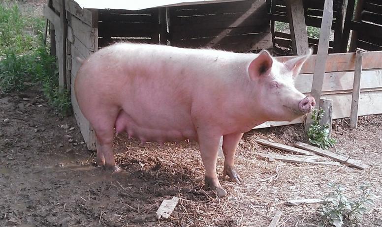 Venez découvrir nos animaux de la ferme !