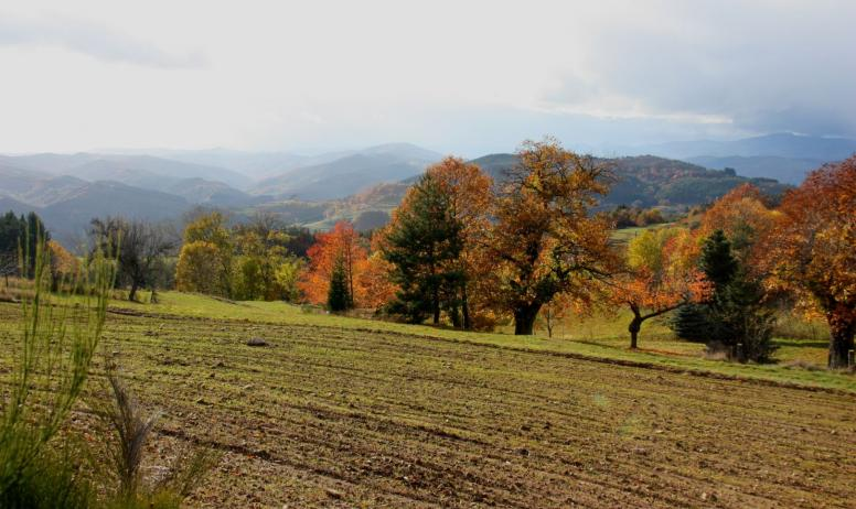 © La Forêt du Puy