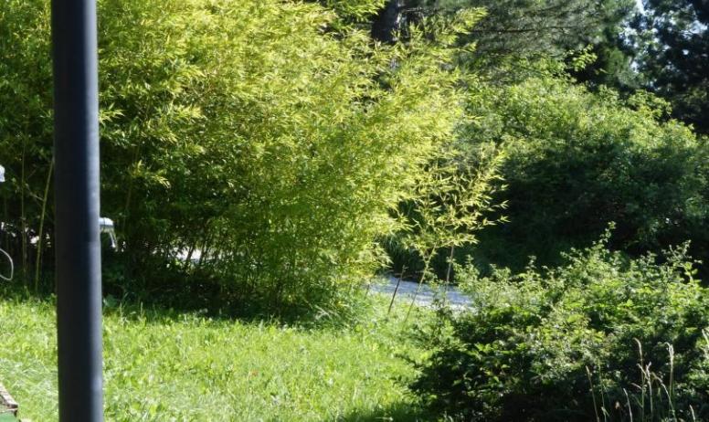 Chalets d'Arbres - Chalets d'Arbres - Chalet Blanc