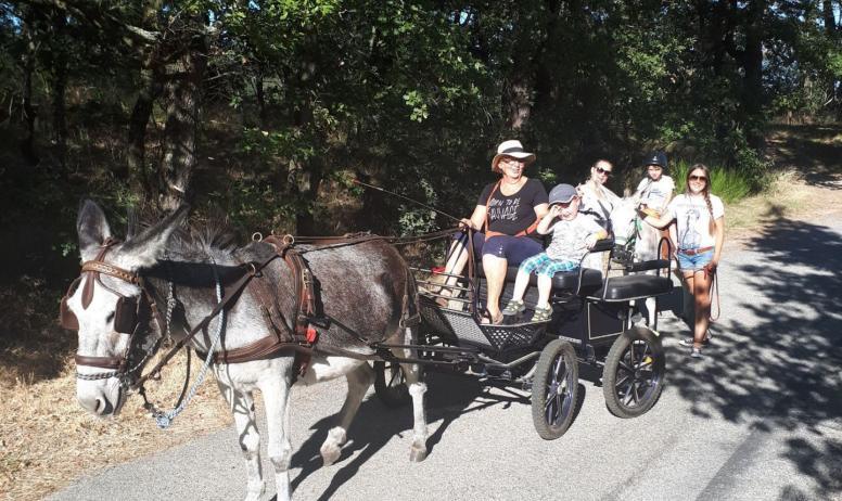 Gîtes de France - Balane en calèche  avec Cath'âne