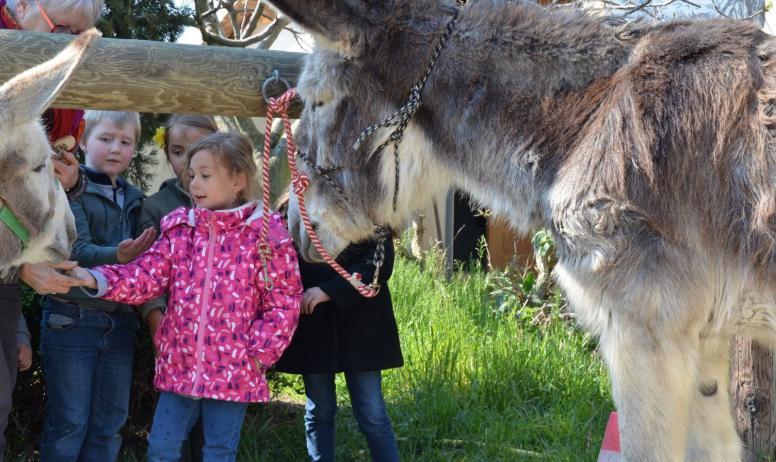 Gîtes de France - découverte de l'âne