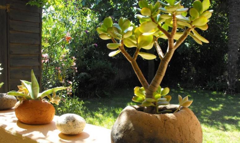 Gîtes de France -  Plantes grasses dans des pots façonnés par Marion,