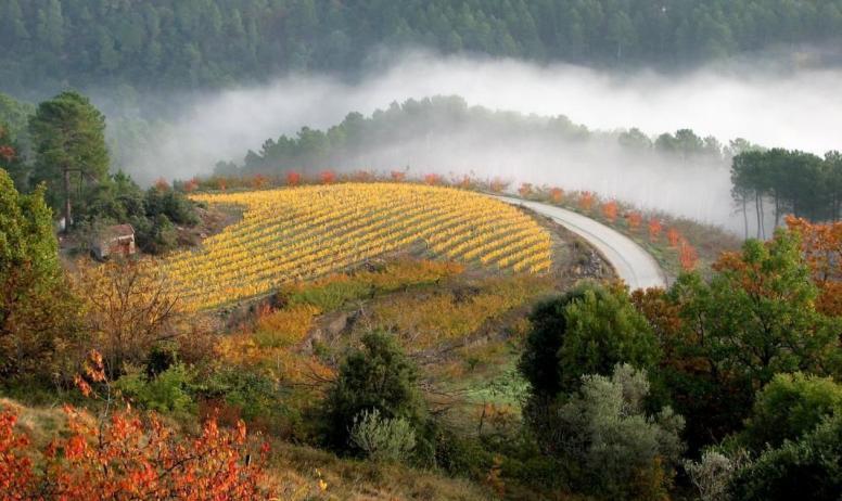Gîtes de France - champ de vignes en automne