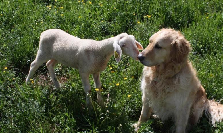 Gîtes de France - petit agneau de la ferme