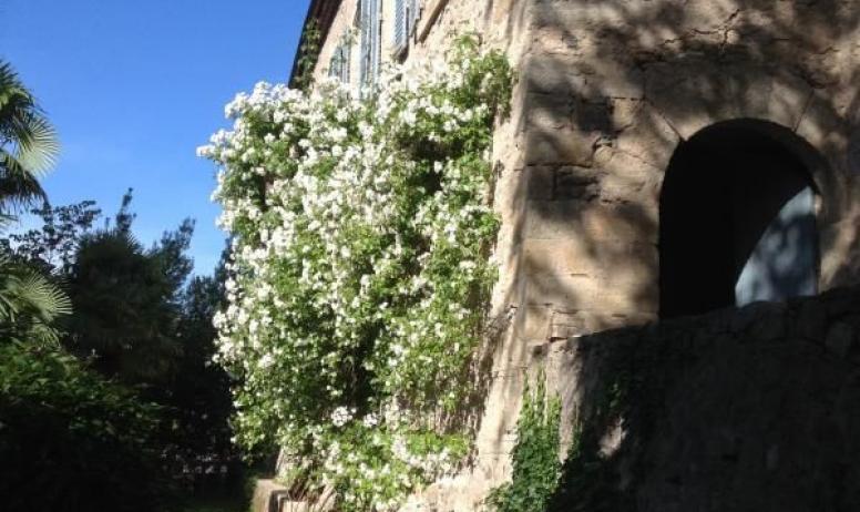 Gîtes de France - Au Château d'Uzer, une des terrasses du château, avec un magnifique rosier ancien (Bobbies James) qui grimpe sur la façade de l'aile XIXème.