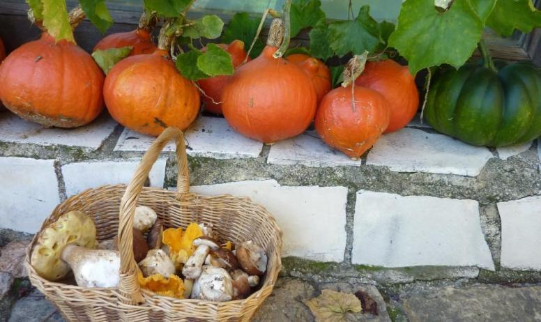 Gîtes de France - l' automne et les champignons...