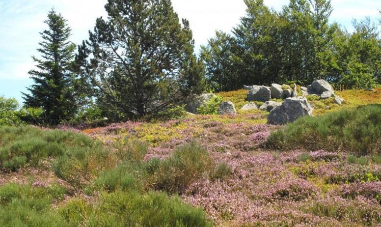 Gîtes de France - randonnée au milieu des bruyères...