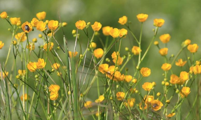 Gîtes de France - les fleurs de la prairie