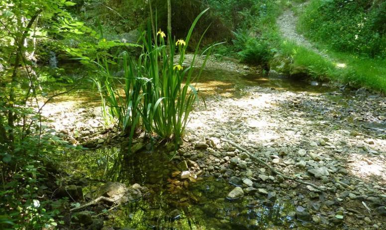 Gîtes de France - les iris d' eau de la baindola