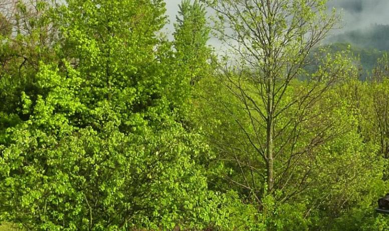 Gîtes de France - Les arbres du jardin