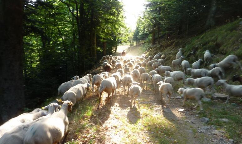 Gîtes de France - quel plaisir de voir passer les brebis du voisin...