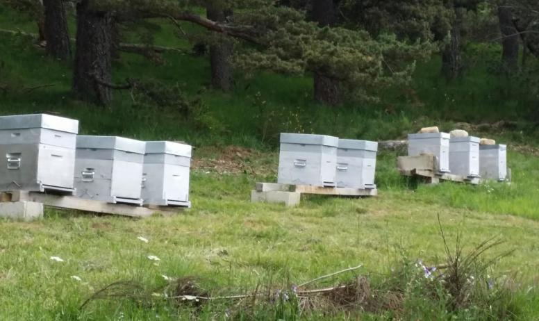 Gîtes de France - Nos abeilles. Rucher des Hauts plateaux.