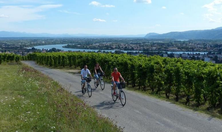 OT du Tournonais - Vélo électrique dansles vignes