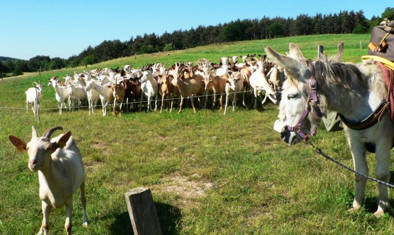 © Ânes sans frontières - Rencontre des ânes avec les chèvres