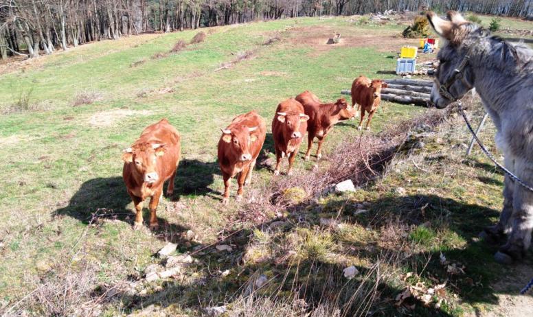 © Ânes sans frontières - Rencontre des ânes avec les vaches