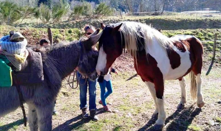 © Ânes sans frontières - Rencontre des ânes avec les chevaux