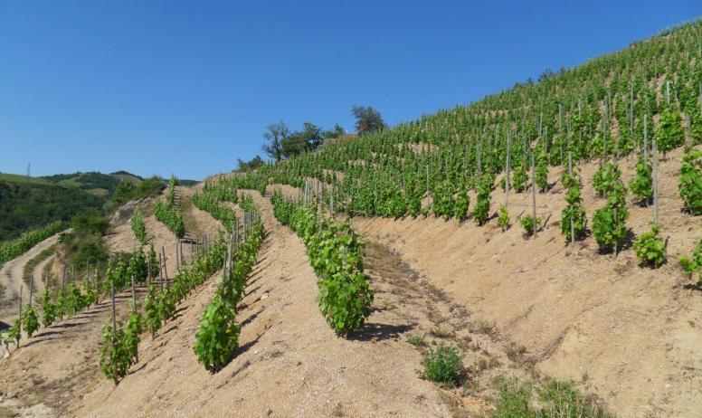 JC et N Fayolle - Les vignes en coteau
