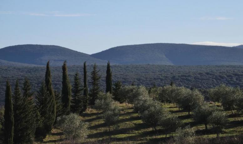 Gîtes de France - Vue de l'oliveraie