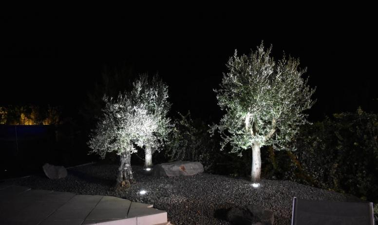Gîtes de France - l'éclairage des oliviers