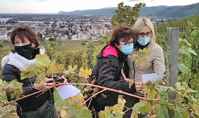 Le petit train des vignes - Recherche indices dans les vignes