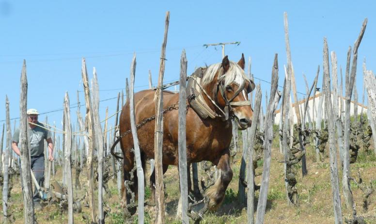 - Le cheval