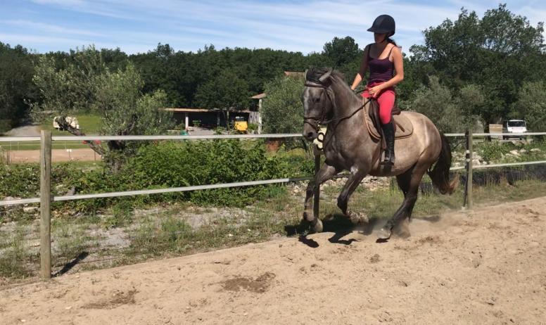 J. Talagrand - cheval dans manège