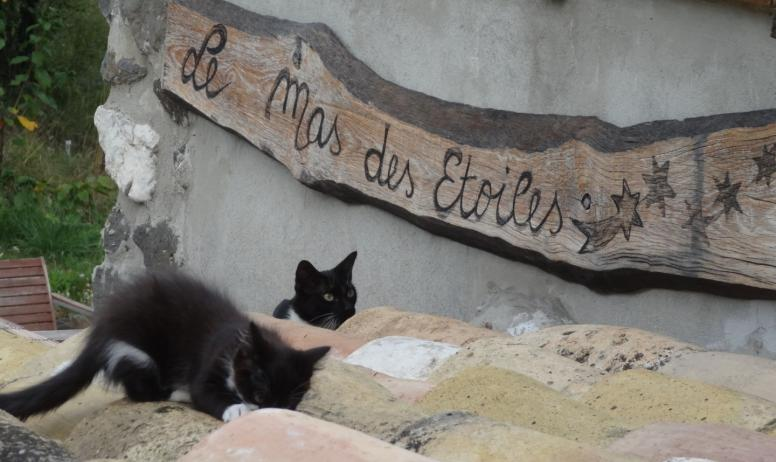 Mas des Etoiles - Chats