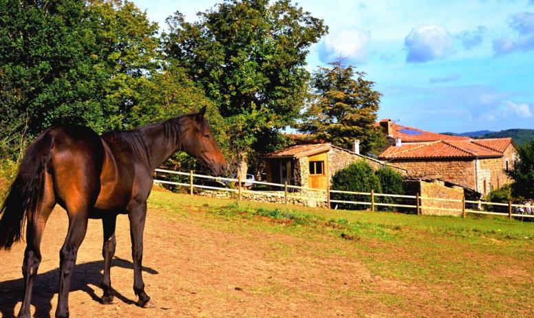 """© Domaine du Pray d'Aunay - Un cheval du centre équestre """"Pray d'Aunay Équitation"""""""