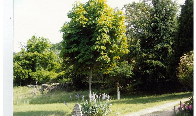 Gîte le Rieu - Jardin