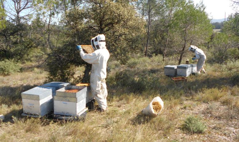 Terre d'abeilles - apiculteur et ruches