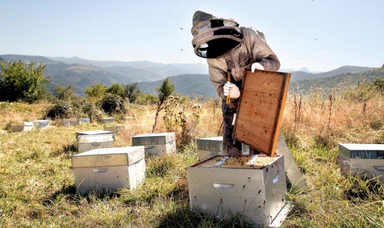 Terre d'abeilles - rucher